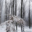 Snow in a forest with frost on branches — Stock fotografie