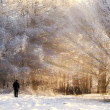 Beautiful frozen forest, with sun rays — Stock Photo