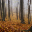Autumn colors in a misty forest — Stock Photo