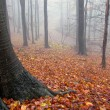 Autumn colors in a forest with fog — Stock Photo