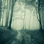 paysage d'une sombre forêt de brouillard — Photo #10404772