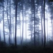Sunrise in a forest with fog in a cold morning — Stock Photo