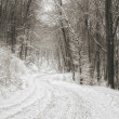 Winter road in the forest — Stock Photo