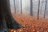 Cores de outono em uma floresta com névoa — Foto Stock