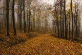 Autumn in an orange forest with fog — Stock Photo