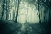 Landscape from a dark forest with fog — Stock Photo