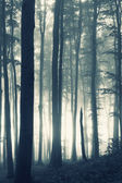 Vertical photo of sunrise in a forest with fog — Stock Photo