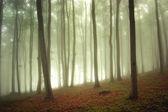 Zonlicht in een groen bos met mist — Stockfoto