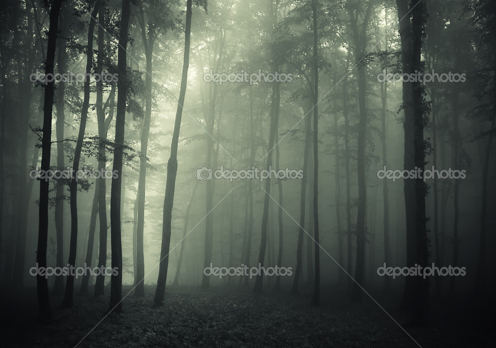 Forest with fog in a dark and mysterious forest — Photo #10404832