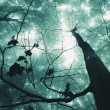 Постер, плакат: Tree in a magical forest