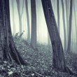 Rain in a forest with fog — Foto de Stock