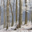 Misty winter morning in a frozen forest — Stock Photo