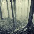 Forest with fog and dark trees — Stock Photo