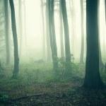 brouillard à travers les arbres dans une forêt sombre et mystérieuse — Photo