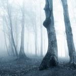vieux arbres dans une forêt de brouillard — Photo
