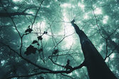 Tree in a magical forest — Stock Photo