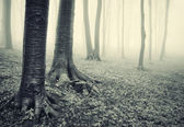 Tree trunks in forest — Stock Photo