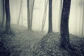Dunklen wald mit nebel zwischen den bäumen — Stockfoto