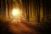Sun rising in a forest with fog — Stock Photo