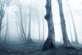 Old trees in a forest with fog — Stock Photo