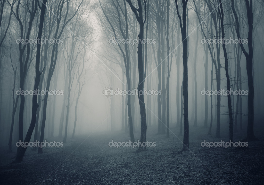 Thick dark forest with fog in autumn  Photo #10520262