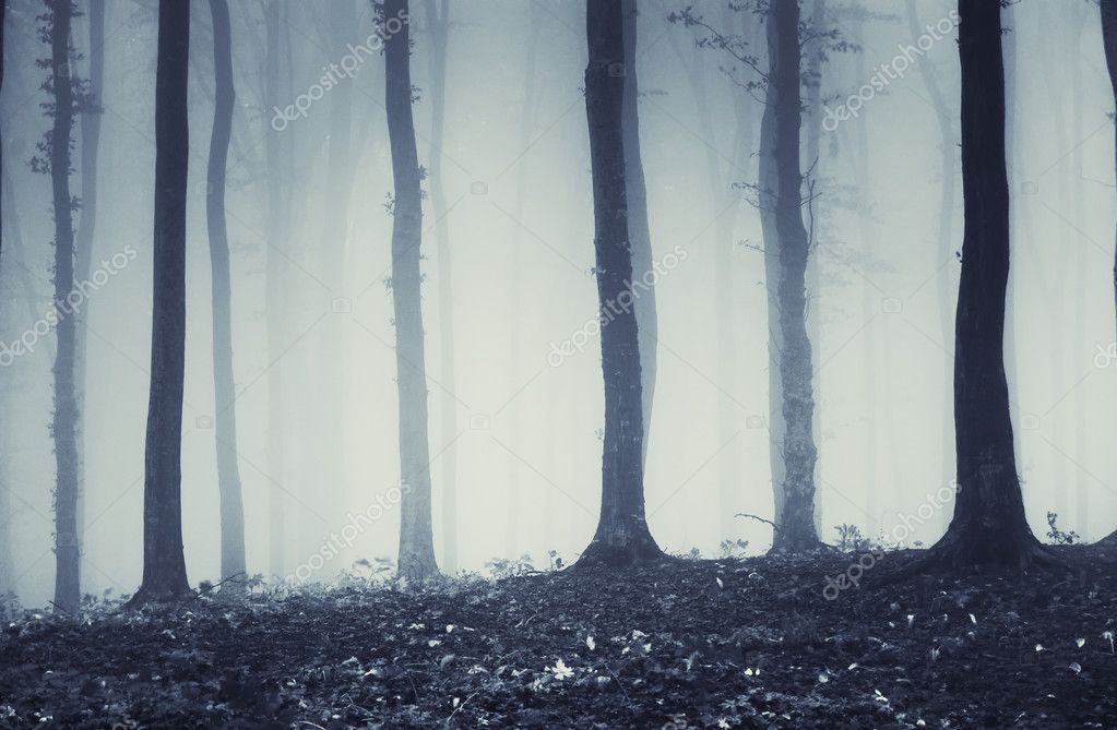 Mysterious dark trees in counterlight in a forest with fog — Photo #10520322