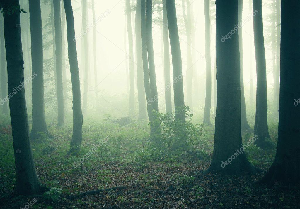Таинственный лес — фото автора photocosma