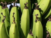 Green Bananas — Stock Photo