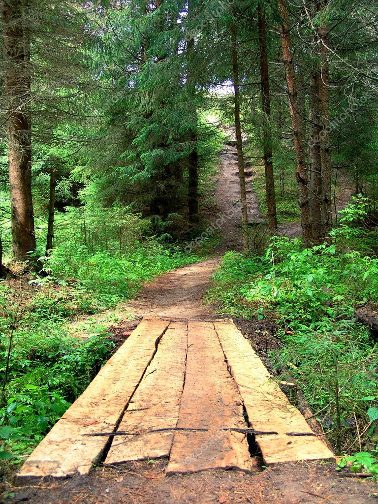 The bridge in a coniferous wood. Russia — Stock Photo #10161628