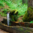 Source in a wood — Stock Photo