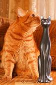 Gatto luminosa rossa — Foto Stock