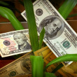Stock Photo: Money flower