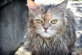 Drenched cat — Stock Photo