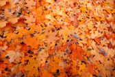 Doku sonbahar yaprakları — Stok fotoğraf