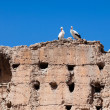Stock Photo: Couple of white storks on top of old wall, Marrakesh