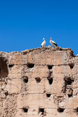 Couple of white storks on the top of old wall, Marrakesh — Stock Photo