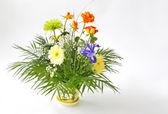 świeży kwiat — Zdjęcie stockowe