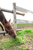 可爱的棕色马 — 图库照片