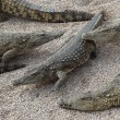 Crocodiles from side — Stock Photo #10711118