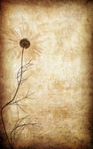 Grunge paper floral background with — Stock Photo