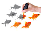 Giving life to a group of goldfish — Stock Photo