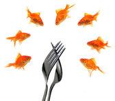 Goldfish group around forks — Stock Photo