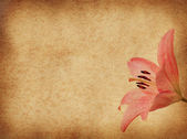 Grunge floral background with pink lilly — Stock Photo