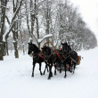 Russian traditional horse triplet — Stock Photo
