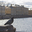 A pigeon near Mojka river in Saint Petersburg — Stock Photo