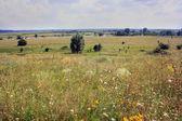 A splendid Ukrainian meadow — Stock Photo
