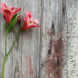 Spring flower on a wooden background - Stock Photo