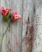 Spring flower on a wooden background — Stock Photo