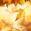 Yellow autumn leaves - Stock Photo