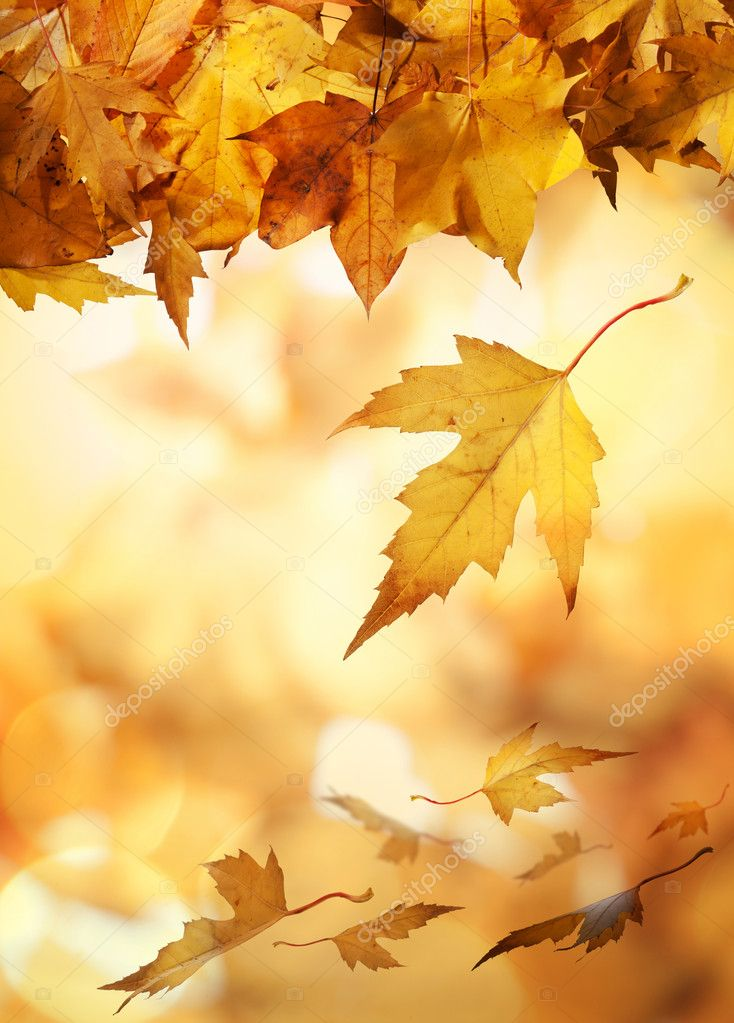 Autumn leaves falling against a golden background. — Stock Photo #10162652